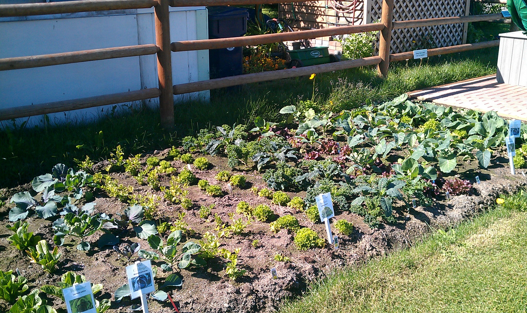 Small vegetable garden at the Palmer Museum & Visitor Center.